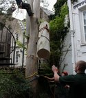 Square thumb tree felling