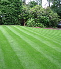 Square thumb new rolawn medallion lawn in fleet  hampshire 2