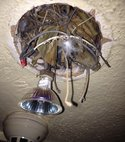 Square thumb birds nest in cieling