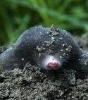 Square thumb mole image