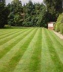 Square thumb greenthumb croydon lawn4 400 300 75 s c1