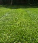 Square thumb andover lush lawn 800 600 75 s