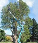 Square thumb treework