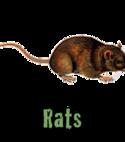 Square thumb rats