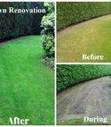 Square thumb lawn renovation