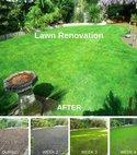 Square thumb lawn renovation  2