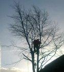 Square thumb tree1