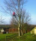 Square thumb tree2