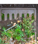 Square thumb for high pressure jetting in east grinstead call detection drain services ltd blocked drains