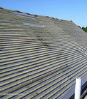 Square thumb moss roof during281x210