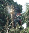 Square thumb treework   aloft
