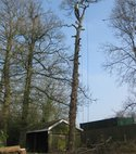 Square thumb oak dismantle