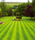 Square thumb striped lawn