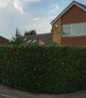 Square thumb hedge after works carried out