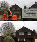 Square thumb guildford tree surgeons oak reduction