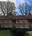 Square thumb guildford tree surgeons veteran oak reduction