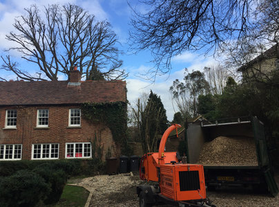 Primary thumb guildford tree surgeons veteran oak reduction 2