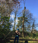 Square thumb guildford tree surgeons tree removal dismantling