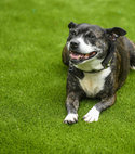Square thumb gallery large unsug lazylawn rspca 04092018 21
