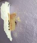 Square thumb wasps entering through internal bedroom wall.