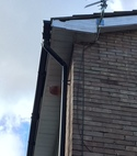 Square thumb hole in soffit allowing squirrel access