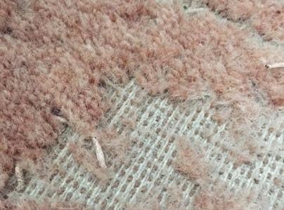Primary thumb textile moth damage