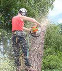 Square thumb jenks oxford tree team 1  4