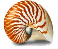Profile thumb shell no background master