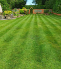 Square thumb fleet lawn