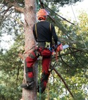 Square thumb tree surgeon 3 1766132