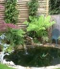 Square thumb landscaping planting garden maintenence sunshine gardens christchurch bournemouth dorset v19