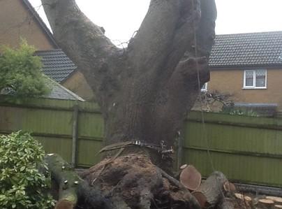 Primary thumb tree surgeon garden maintenance landscaping fencing sunshine gardens christchurch dorset 6
