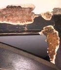Square thumb dry rot